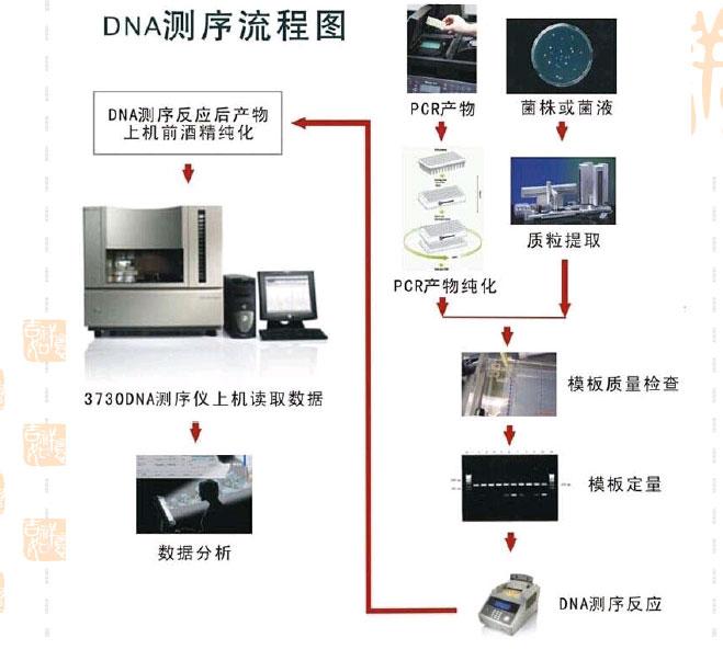 dna测序的原理是什么?步骤如何?